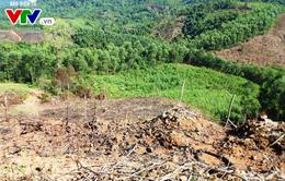 Vụ phá rừng quy mô lớn tại Bình Định: Kỷ luật một số cán bộ, nhân viên kiểm lâm