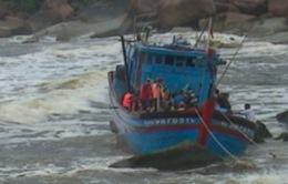 Bất chấp bão số 11, nhiều tàu cá Quảng Ngãi vẫn ra khơi