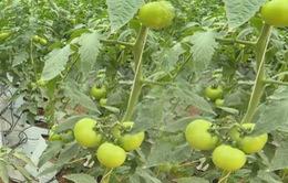 Doanh nghiệp nông nghệ công nghệ cao khó tiếp cận vốn