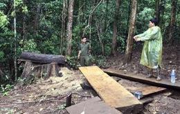 Khởi tố nguyên Trưởng Công an xã Đăk Ui (Kon Tum) liên quan đến phá rừng