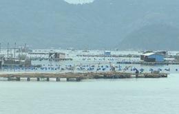 Chồng lấn quy hoạch nuôi tôm hùm và du lịch ở Phú Yên