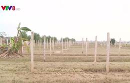 Thừa Thiên - Huế: Hàng trăm ha hoa màu mất trắng sau lũ