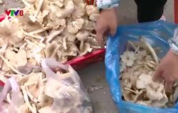 Độc đáo phiên chợ nấm rừng ở Phú Yên