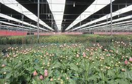 """Liên kết """"3 nhà"""" phát triển nông nghiệp công nghệ cao"""