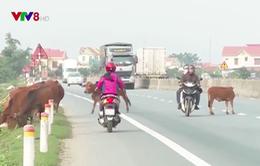 Mất an toàn giao thông trên quốc lộ 1A qua Quảng Bình