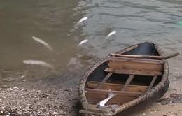 Kết quả chất lượng nước vùng cá chết hàng loạt ở đầm Lăng Cô