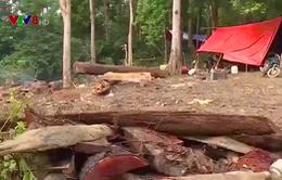 Nạn phá rừng diễn biến phức tạp tại Đắk Lắk