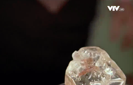 Đấu giá viên kim cương hoà bình