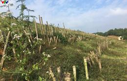 Quảng Trị: Đập Triệu Thượng 2 sạt lở nghiêm trọng