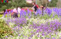 Du lịch hoa - Lựa chọn của nhiều du khách