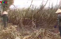Điều tra làm rõ vụ cháy hơn 120 ha mía ở Đắk Lắk