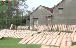 Làng bánh tráng Phú Yên vào vụ Tết
