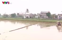 Thừa Thiên Huế: Nỗ lực tiêu úng thoát nước phục vụ vụ Đông Xuân