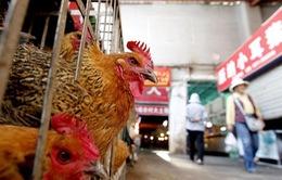 Nguy cơ cúm A/H7N9 xâm nhập vào Việt Nam