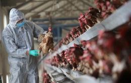 Trung Quốc phát hiện thêm ca nhiễm virus H7N9 mới