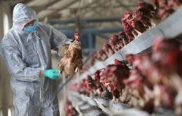 Thêm 6 trường hợp nhiễm cúm A/H7N9 tại Trung Quốc
