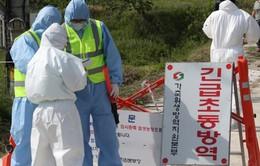 Dịch cúm gia cầm diễn biến phức tạp tại Hàn Quốc
