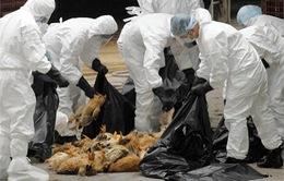 Việt Nam cần cảnh giác với cúm A/H7N9