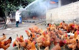 Bộ Y tế ban hành công văn khẩn chống cúm gia cầm lây sang người