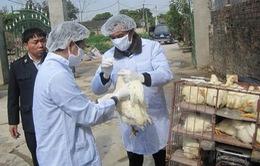 Bình Định tăng cường phòng chống cúm gia cầm
