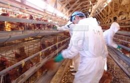 Trung Quốc đẩy mạnh phòng cúm H7N9