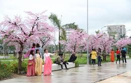 Nhà thiếu nhi Đà Nẵng thu hút giới trẻ tới chụp ảnh