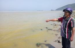 Dải nước vàng gây cá chết ở biển Cảnh Dương là do tảo phát triển mạnh