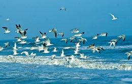 Liên Hợp Quốc kỷ niệm ngày Đại dương thế giới