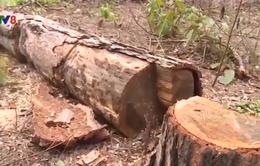 Đăk Nông: Kỷ luật một số cán bộ kiểm lâm vụ chặt phá hơn 46ha rừng