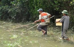 Người dân ĐBSCL vẫn bắt cá bằng xung điện dù bị cấm