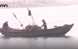 Tái diễn tình trạng đánh bắt tôm hùm trái phép tại cảng Chân Mây