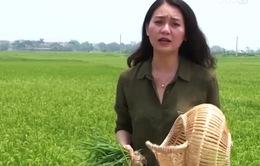 Nghịch lý đào tạo nghề nông thôn