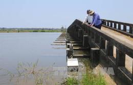 Thừa Thiên - Huế: 1,5 tỷ đồng khắc phục đập Cửa Lác xuống cấp