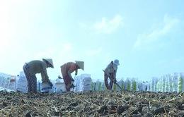 Vĩnh Long: Rầm rộ tình trạng bán đất mặt ruộng