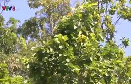 Gia Lai khẩn trương thu hồi đất rừng bị lấn chiếm