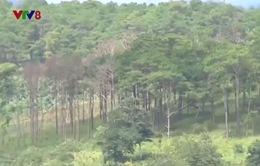 Băn khoăn khi cấp số đỏ rừng bị lấn chiếm