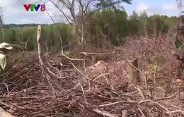 Dự án rừng Flitch chưa giải quyết được tình trạng thiếu đất sản xuất