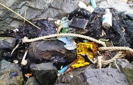 Quảng Nam: Dầu vón cục, rác tiếp tục dạt vào bãi biển