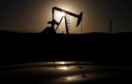 Citigroup: Giá dầu có thể tăng lên 60 USD/thùng