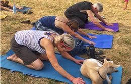 Trải nghiệm những lớp học Yoga đặc biệt