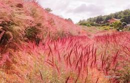 Đà Lạt giảm giá vé đón khách trong mùa hội cỏ hồng