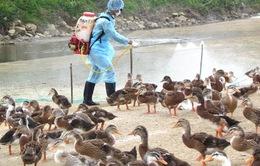 Các tỉnh biên giới phía Bắc tăng cường kiểm soát cúm gia cầm
