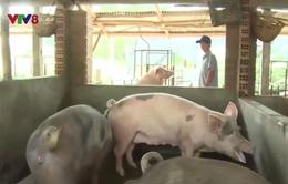 Bình Định tăng cường phòng chống dịch bệnh trên gia súc