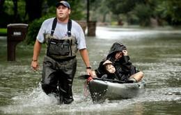 Nguy cơ bùng phát dịch bệnh sau bão Harvey ở Mỹ