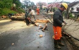 Phú Yên: Tập trung nhân lực, vật lực khắc phục sự cố điện