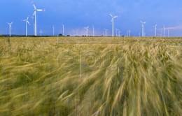 Điện gió - Nguồn năng lượng quan trọng thứ 2 tại châu Âu