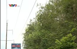 Bình Phước: Mất điện trên diện rộng vì sự cố đường dây 110kV