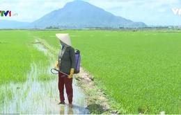 Nhiều mối nguy hại từ tình trạng lạm dụng thuốc diệt cỏ