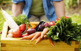 Những lưu ý về chế độ ăn uống trong ngày Tết