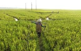 Khó mở rộng diện tích sản xuất hữu cơ